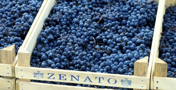 zenato2